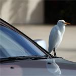 Lakschade door vogelpoep voorkomen | Autobedrijf Auto Nol